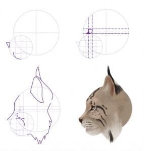Kā uzzīmēt dzīvniekus