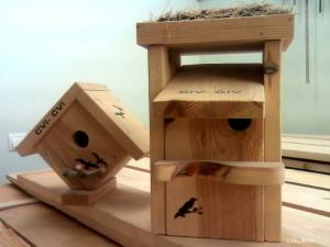 Putnu būrīši