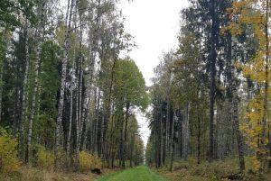 Jauktu koku mezs