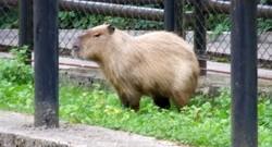 Rīgas zoo